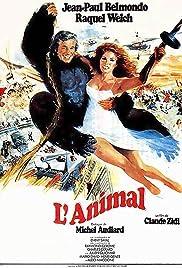 Animal Poster