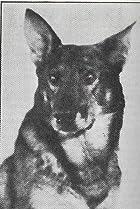 Image of Rin Tin Tin