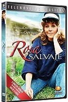 Image of Rosa salvaje