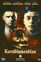 Image of Kornblumenblau