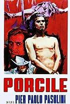 Image of Porcile