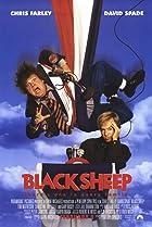 Image of Black Sheep