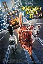 Image of Homeward Bound II: Lost in San Francisco