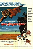 Image of Run, Cougar, Run