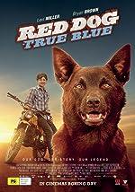 Red Dog True Blue