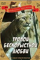 Image of Tropoy beskorystoy lyubvi