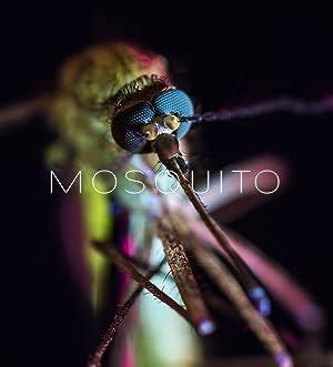 Mosquito (2017)