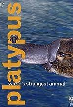 Platypus: World's Strangest Animal