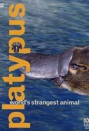 Platypus: World's Strangest Animal Poster