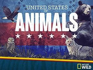United States of Animals