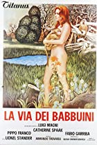 Image of La via dei babbuini