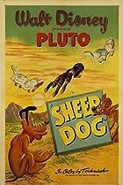 Sheep Dog (1949) Poster