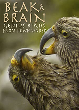 Superhirn im Federkleid – Kluge Vögel im Duell