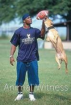 Animal Witness