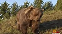 Giant Bear Attack