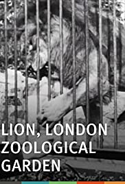 Lion, London Zoological Garden Poster