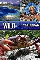 Image of Wild Caribbean