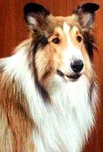 Lassie's primary photo
