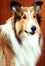 Lassie's primary photo