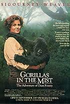 Image of Gorillas in the Mist