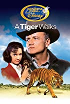 Image of A Tiger Walks