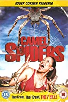 Image of Camel Spiders