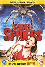 Primary image for Camel Spiders