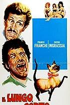 Image of Il lungo, il corto, il gatto