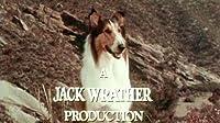 Lassie's Rescue Mission