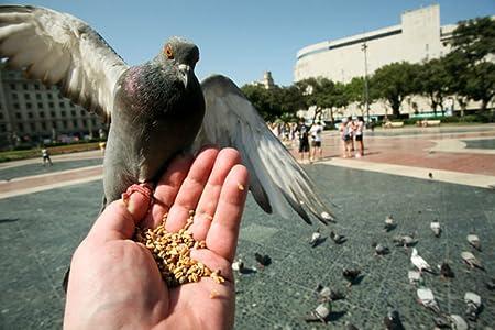 Movie database Feeding Pigeons [2K] USA | HD MOVIES - HD Movies