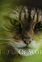 Primary image for The Tigers of Scotland