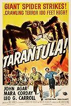 Image of Tarantula