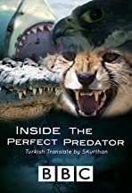 Inside the Perfect Predator