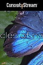 Image of Richard Hammond's Miracles of Nature