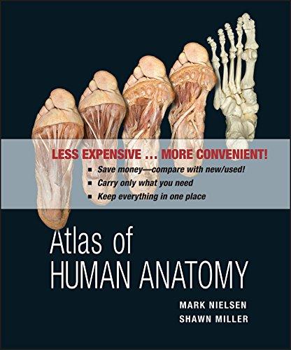 Of pdf atlas human anatomy
