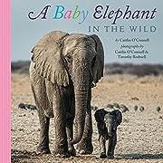 A Baby Elephant in the Wild de Caitlin…