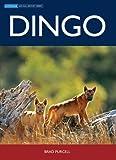 Dingo / Brad Purcell