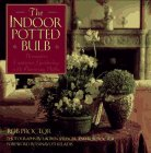 The indoor potted bulb :