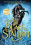 The Black Stallion (1941) (Book) written by Walter Farley