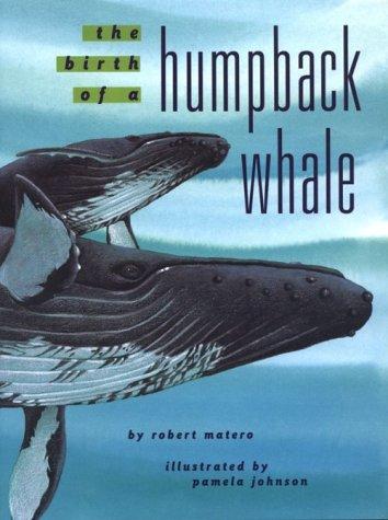 Beluga whale childrens book