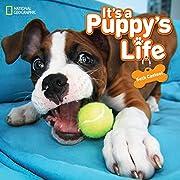 It's a Puppy's Life (Animals) por Seth…