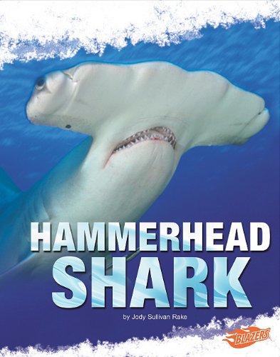 hammerhead sharks essay