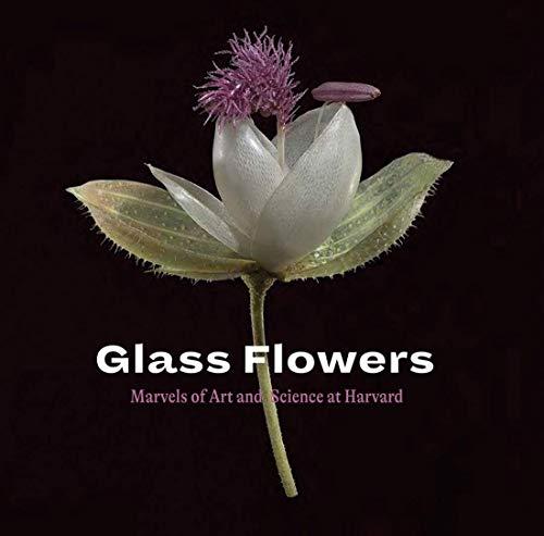 Glass flowers :