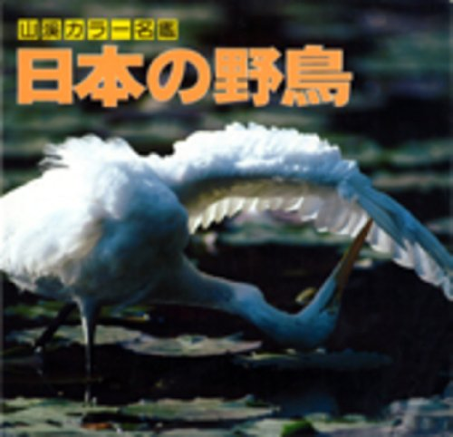 山渓カラー名鑑 日本の野鳥