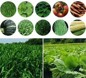 1杯で10種類の野菜とマイタケエキスが摂取できる。