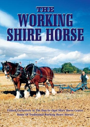 The Working Shire Horse