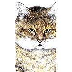 俺、つしま iPhoneSE/5s/5c/5(640×1136)壁紙 つしま