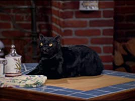 Prime Video Sabrina The Teenage Witch Season 1 What do you call a man who rubs women the wrong way? prime video sabrina the teenage witch