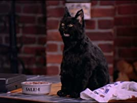 Sabrina The Teenage Witch Season 1 Prime Video Nate richert was born on april 28, 1978 in st. sabrina the teenage witch season 1