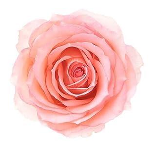 Rose Rivera